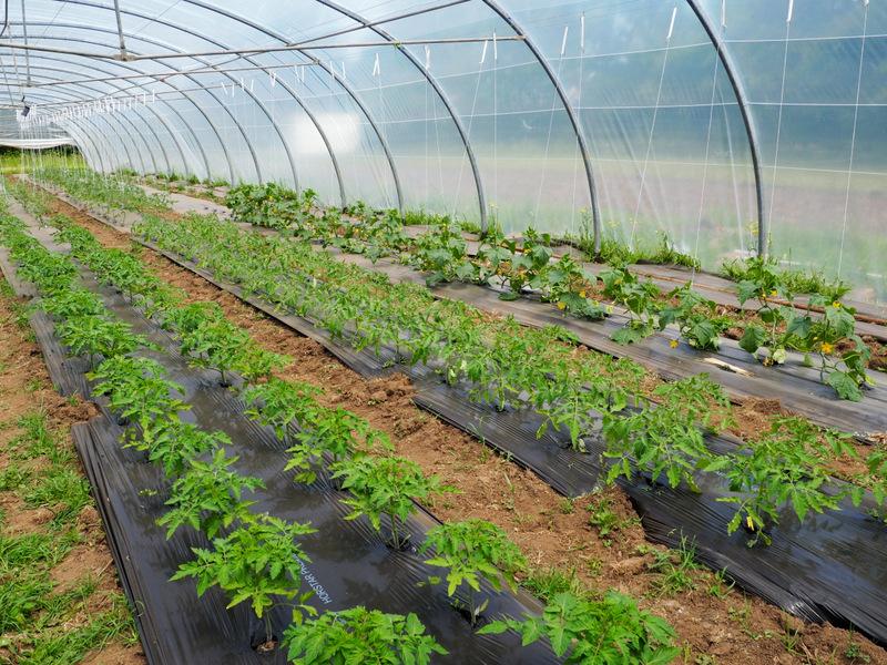 Plantations serre 1 - Mai 2019