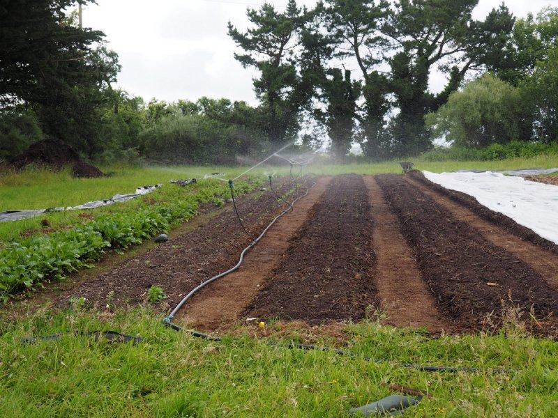 Semis légumes racines
